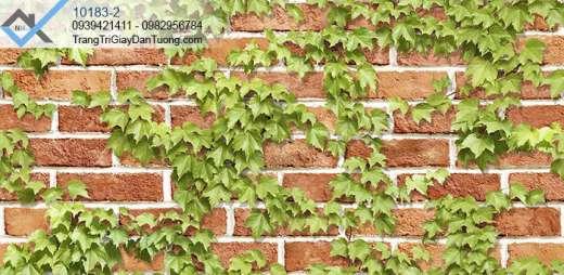 Giấy dán tường dây leo tường gạch