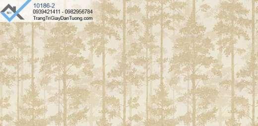 Giấy dán tường cây thông