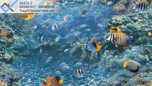 Giấy dán tường hồ cá