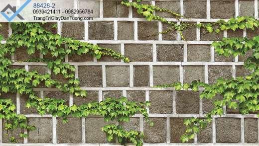 Giấy dán tường giây leo tường gạch